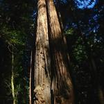 Image: Aditi vs. very tall tree