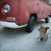 Shared Gaze - Corgie & VW by Jared_R_L