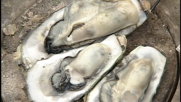 松島牡蠣 (1)