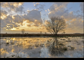 FV Flickr Top 5; 2-39, Eervolle vermelding: Een bewolkt maar vooral nat Dwingelderveld