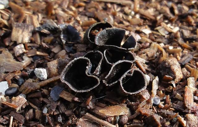 Mystery Fungi IV