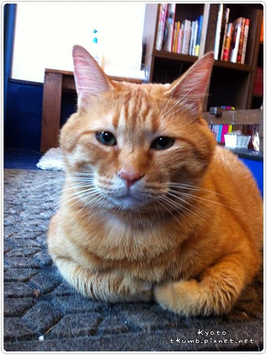 胖貓咖啡 (11).jpg