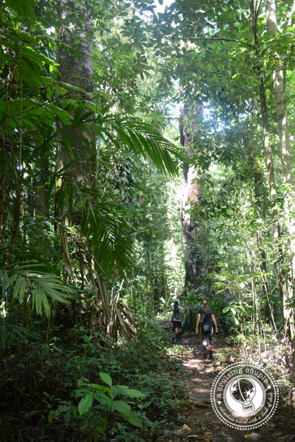 Corcovado National Park Trail