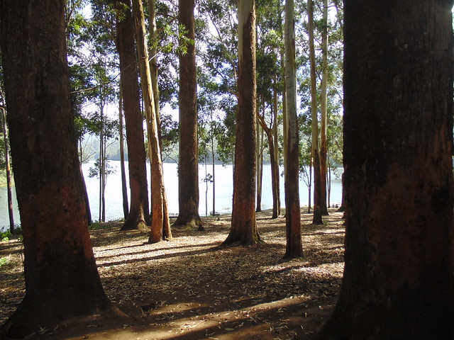 under the shadows of tree at mattupetty dam, Munnar, Kerala