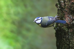 branch(0.0), blue jay(0.0), jay(0.0), animal(1.0), nature(1.0), fauna(1.0), finch(1.0), bluebird(1.0), beak(1.0), bird(1.0), wildlife(1.0),