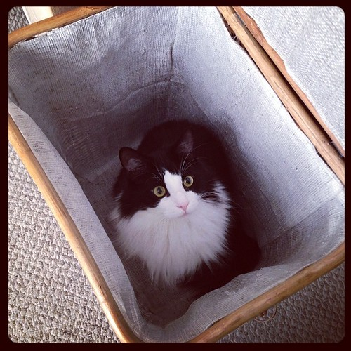 #fmsphotoaday February 11 - Mistake. Cats don't belong in the clothes hamper!