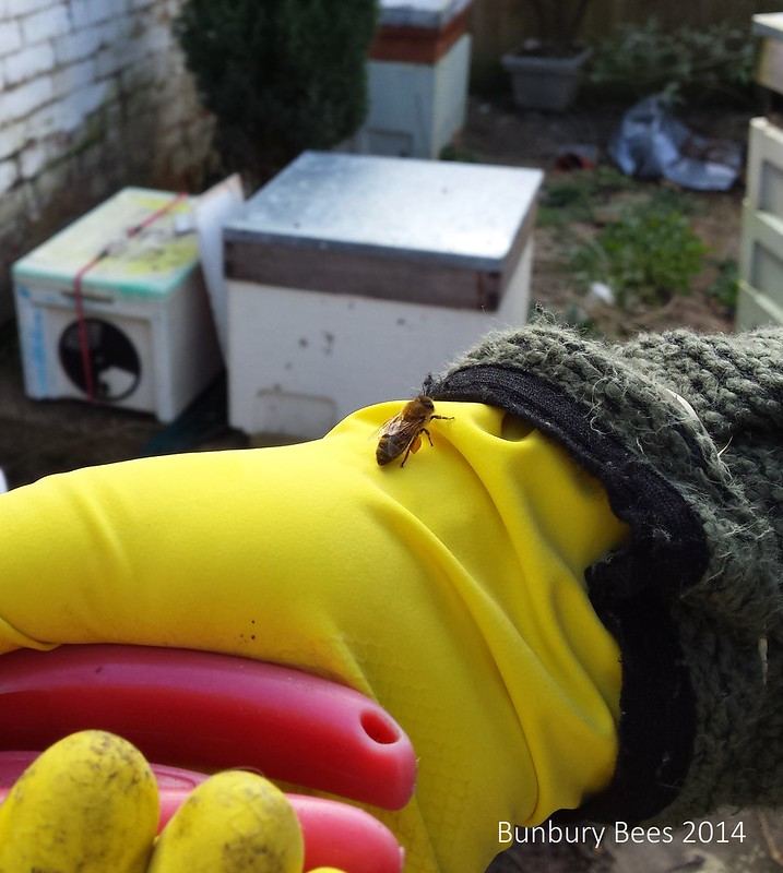 The bees are very comfortable with us!