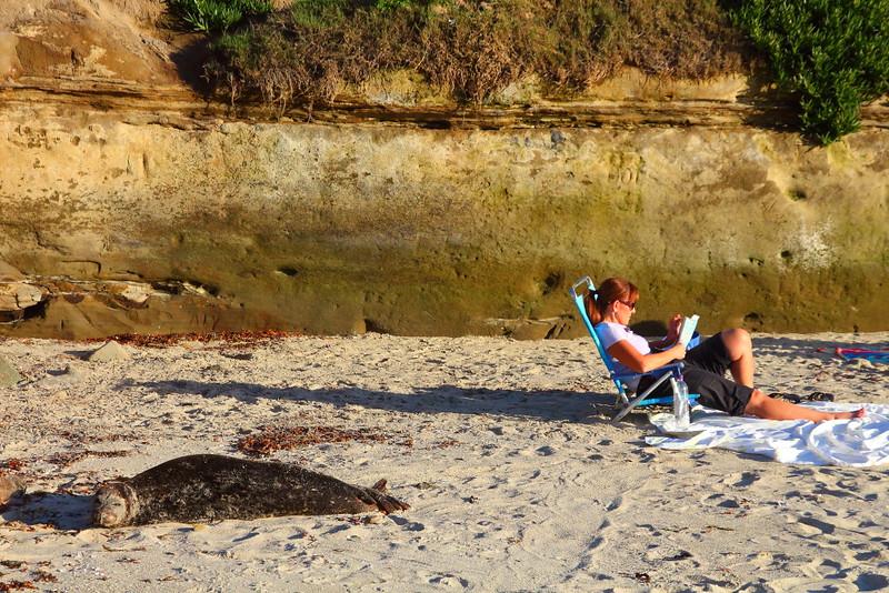 IMG_3236 Harbor Seal on South Casa Beach