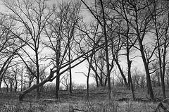 Along Marquette Trail. #leicausa #leica #film #leicam6