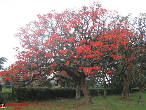 tree garden hotels kericho kenya