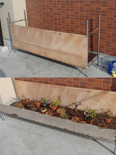 盆栽の囲い撤去