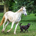 White horse and black dog by BP Chua