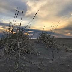 Sunset over Grayland Beach and the Pacific. #adventureinspired #roamtheplanet #awesomeearth #earthfocus #wanderlust #pnwonderland #pnwspotlight #adventurecollectiveco #wastatepark #beach #pacific #sunsets