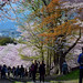 Blossom Path / Kyoto by Images George Rex