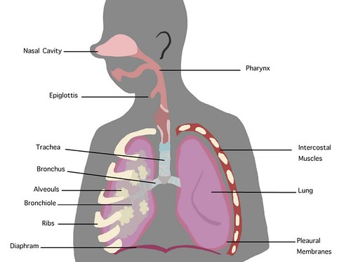 How to Get Rid Of Wheezing In Chest