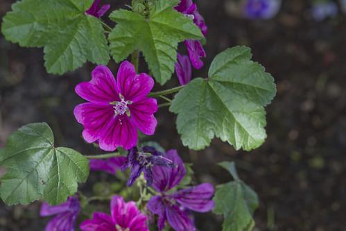 june flowers-4792-4