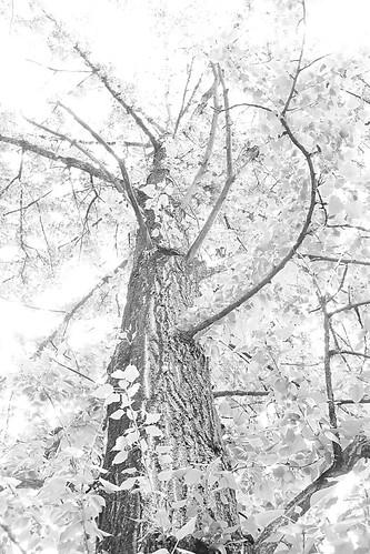 tree12345