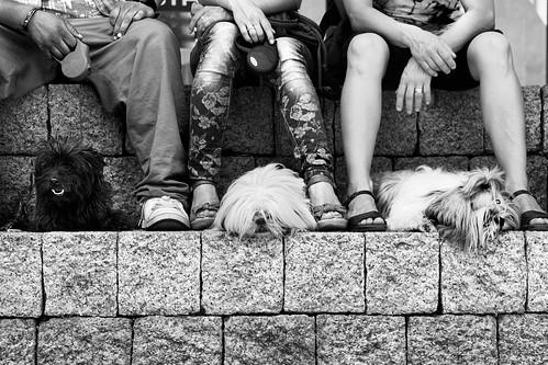3 dogs - 6 legs by Josetxu Silgo