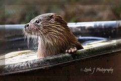 wildlife(0.0), animal(1.0), mustelidae(1.0), mammal(1.0), fauna(1.0), sea otter(1.0), whiskers(1.0), mink(1.0),