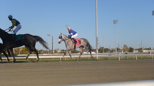 The Classy Yankee Fortune Wins Race 5