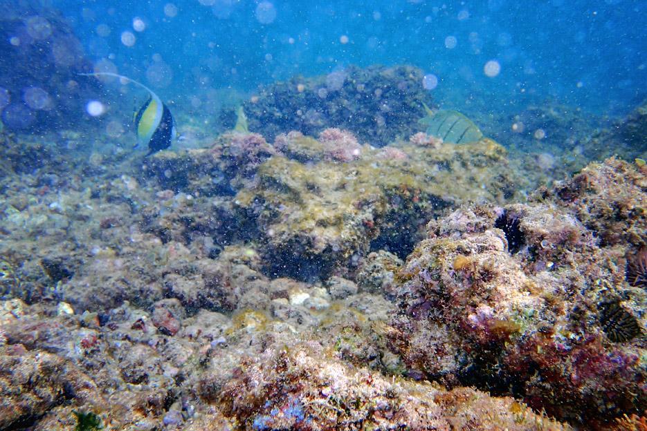 100113_02_snorkeling06