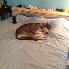 She apparently thinks this is her bed....