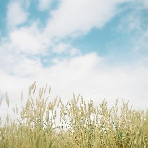 kodak portra400 富良野 yashicamat124 しげさんのちから エビプリ まだまだ夏休み旅行の写真… ひつじの丘牧場
