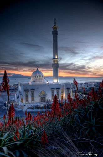 sunset plants sun sunlight nature sunrise nikon mosque hdr aloearborescens nicholasferrary d800e nikond800e