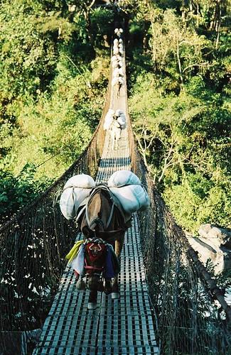 bridge nepal mountain 2004 analog forest trekking trek landscape suspension round himalaya mules annapurna annapurnas canoneos300