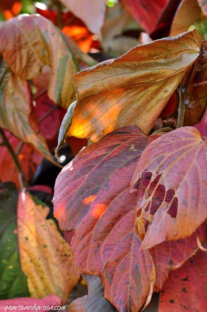 quail_leaves_web