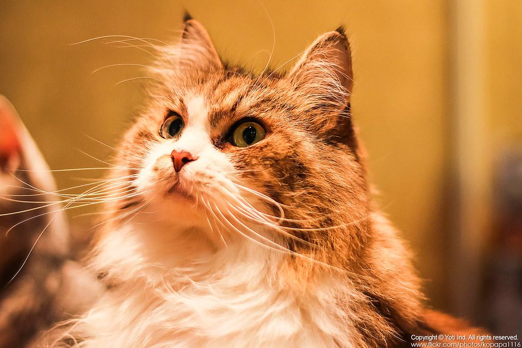 元氣貓主題餐廳 IMG_6168