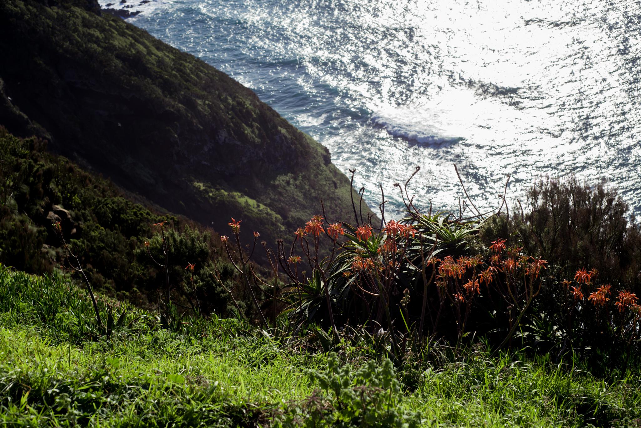 Miradouro da Ponta do Escalvado virágokkal. Fotó: Dobó Diána