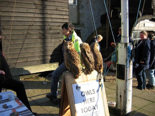 Owls at Hastings