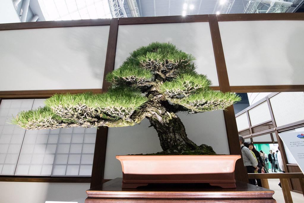 世界盆栽大会 日本の盆栽水石至宝展