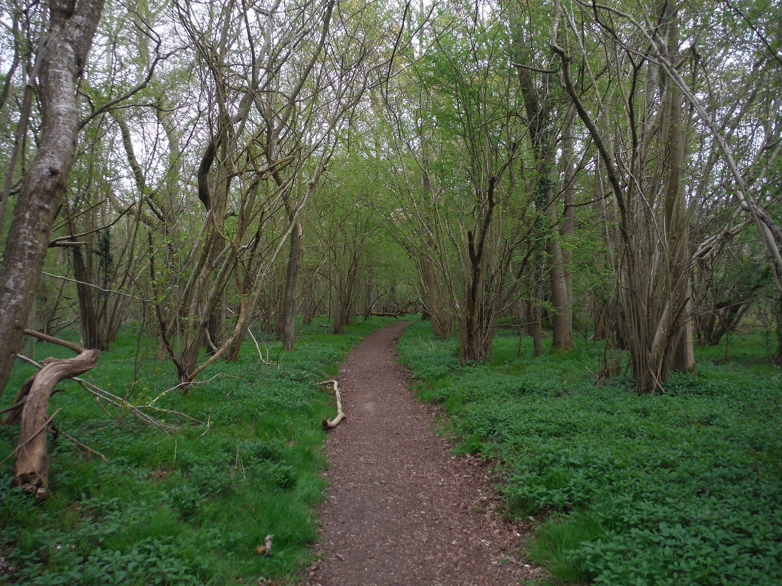 Home Copse, Clarendon Park SWC Walk 265 - Dean to Mottisfont and Dunbridge (Alternative Start from Salisbury)