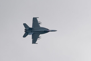 A hornet on the wing