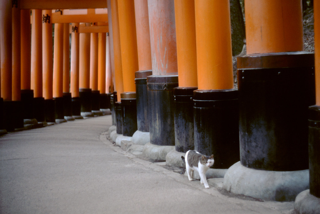 Oinari-san of today