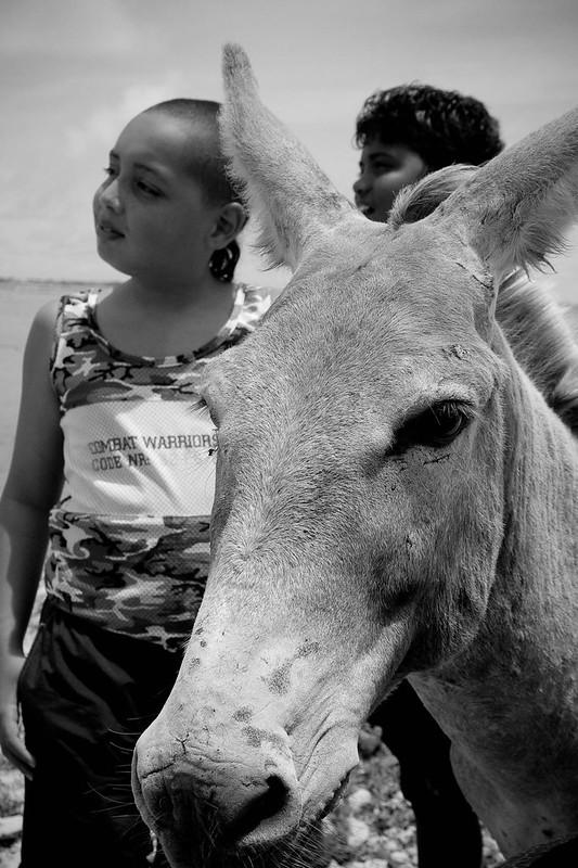 Photobomb Donkey