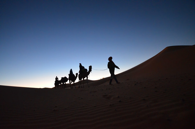 Camello al amanecer por el desierto