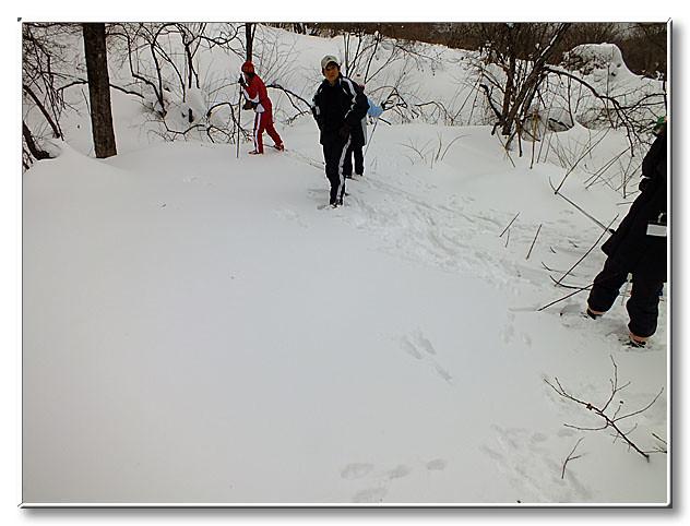 ヤマウサギの足跡.右の参加者の足元から,中央の上野先生までの距離を一足で跳んでいる.