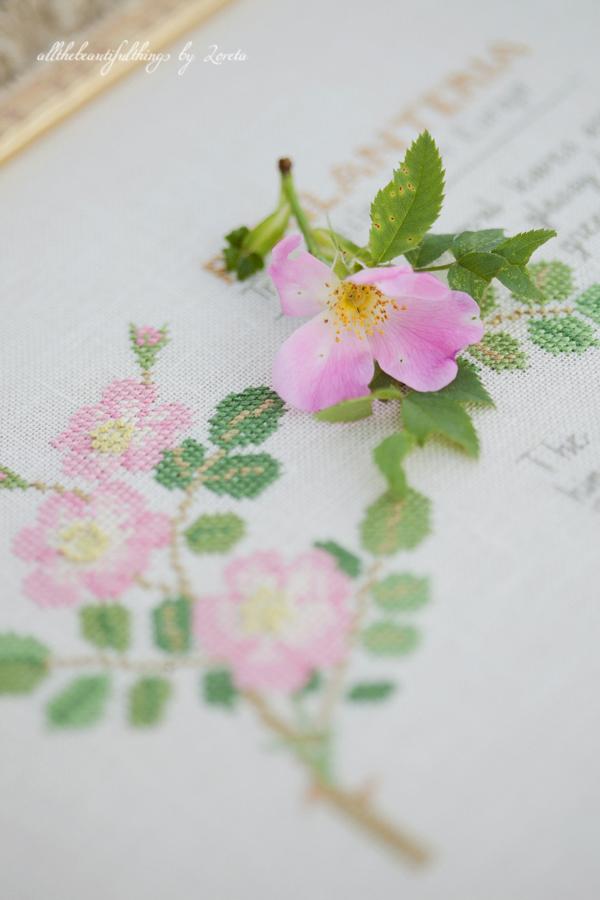 R. Eglanteria -Kazuko Aoki