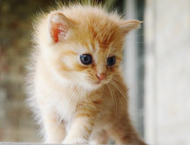 cat rescue pa