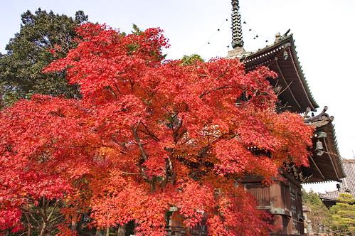 【写真】2012 紅葉 : 清凉寺/2020-09-21/IMGP7820