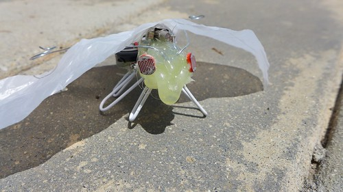 Moth 1 Facing Camera