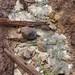 Small photo of Mud volcano effluent
