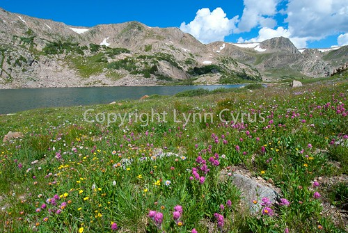 Meadow and Lake 4
