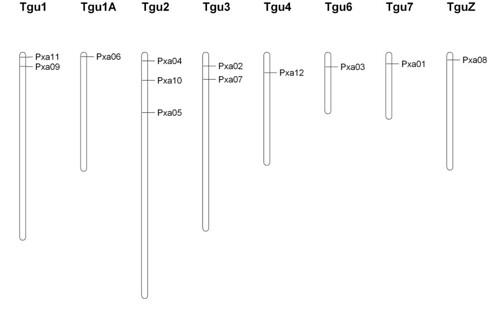 Maui Parrotbill microsatellite markers