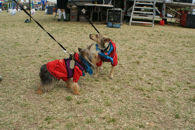 Mighty Texas Dog Walk