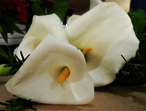 Há uma primavera em cada vida: é preciso cantá-la assim florida by Odete de Paula