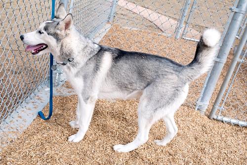 dogpark11